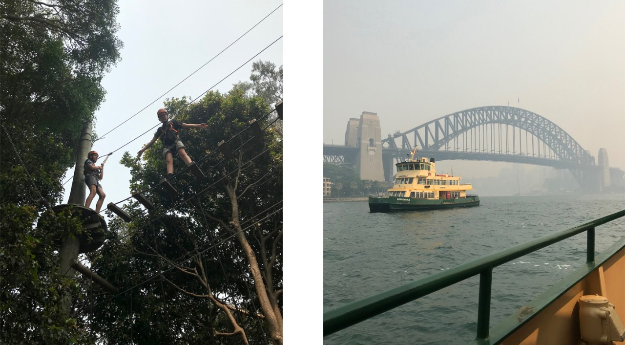 Students high up in the trees and travelling by ferry to the zoo